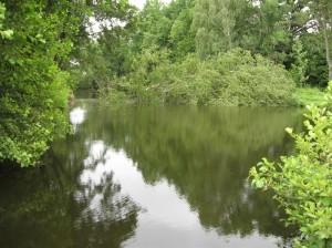 Eingestürzter Baum in die Lache Zaßnitz
