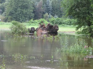 Überreste des Baumes nach der fachgerechten Bergung